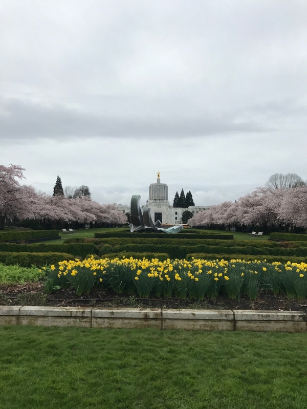 Cherry blossoms along the Oregon Capitol Mall.